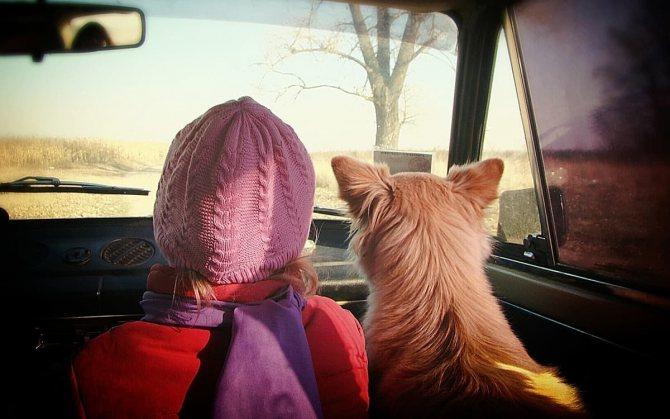 Девочка с собакой едут в машине